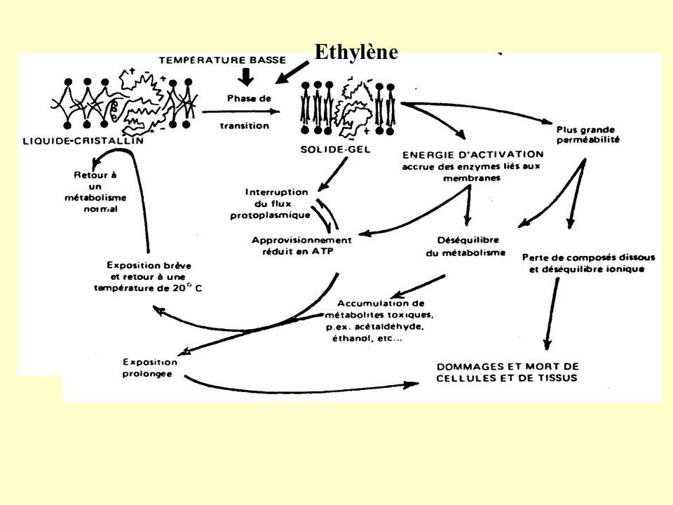 Ethylène