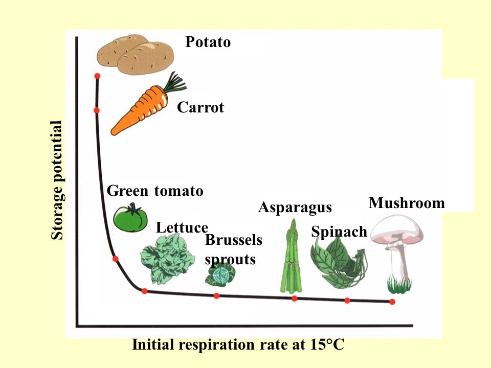 Initial respiration rate at 15°C Storage potential Potato Carrot Green tomato Lettuce Brussels sprouts Asparagus Spinach Mushroom