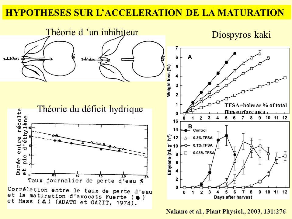 HYPOTHESES SUR LACCELERATION DE LA MATURATION Théorie du déficit hydrique Théorie d un inhibiteur TFSA=holes as % of total film surface area Nakano et
