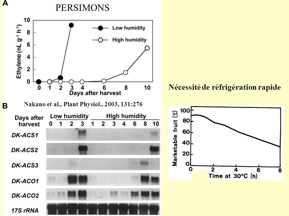 PERSIMONS Nakano et al., Plant Physiol., 2003, 131:276 Nécessité de réfrigération rapide