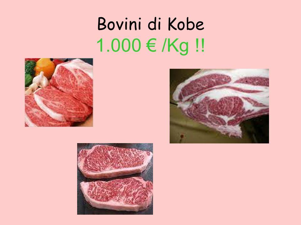 Bovini di Kobe 1.000 /Kg !!