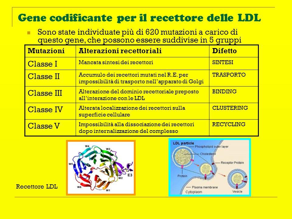 Gene codificante per il recettore delle LDL Sono state individuate più di 620 mutazioni a carico di questo gene, che possono essere suddivise in 5 gru