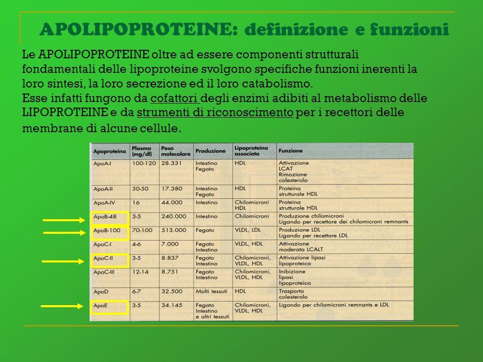 APOLIPOPROTEINE: definizione e funzioni Le APOLIPOPROTEINE oltre ad essere componenti strutturali fondamentali delle lipoproteine svolgono specifiche