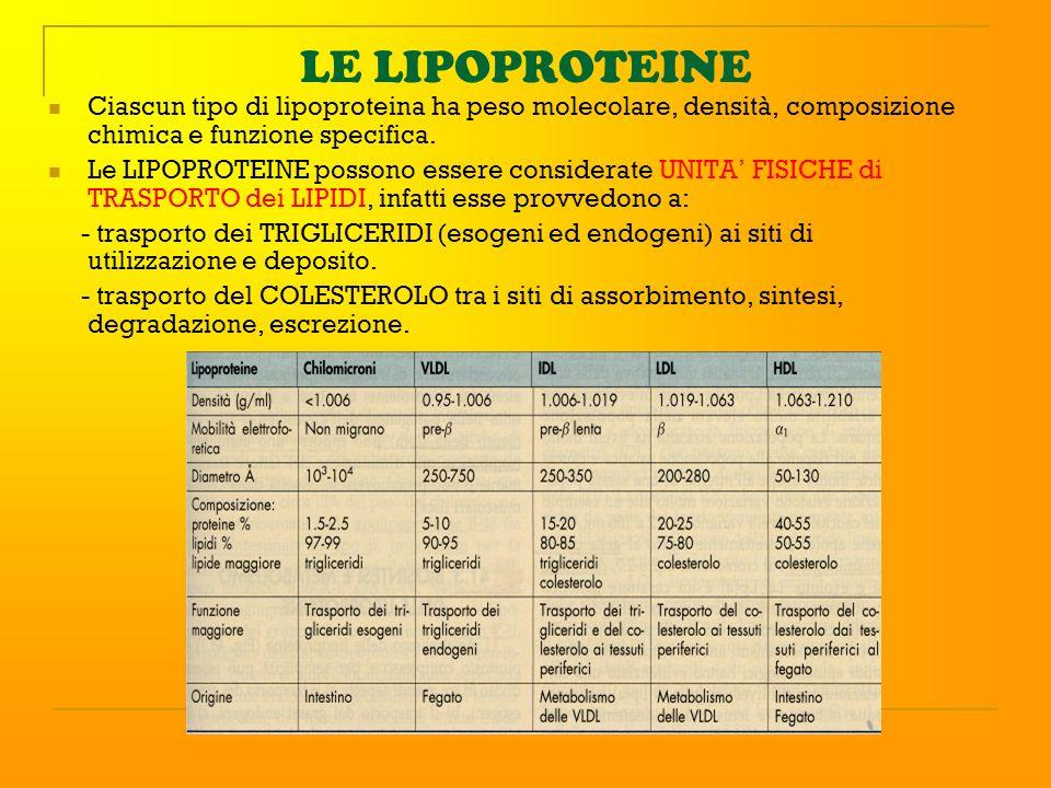LE LIPOPROTEINE Ciascun tipo di lipoproteina ha peso molecolare, densità, composizione chimica e funzione specifica. Le LIPOPROTEINE possono essere co