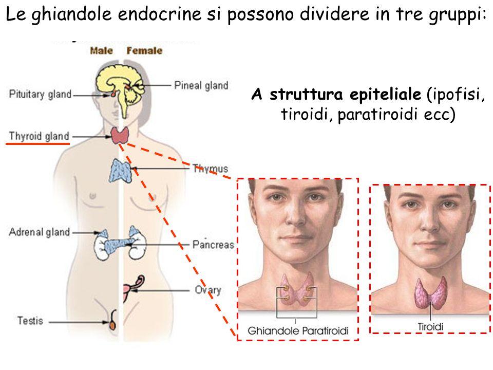 Le ghiandole endocrine si possono dividere in tre gruppi: A struttura epiteliale (ipofisi, tiroidi, paratiroidi ecc)