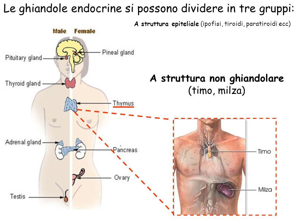 A struttura non ghiandolare (timo, milza) Le ghiandole endocrine si possono dividere in tre gruppi: