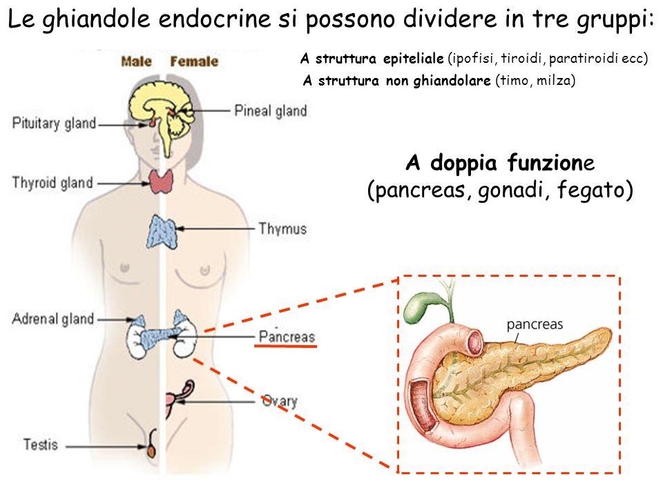 A struttura epiteliale (ipofisi, tiroidi, paratiroidi ecc) A doppia funzione (pancreas, gonadi, fegato) Le ghiandole endocrine si possono dividere in