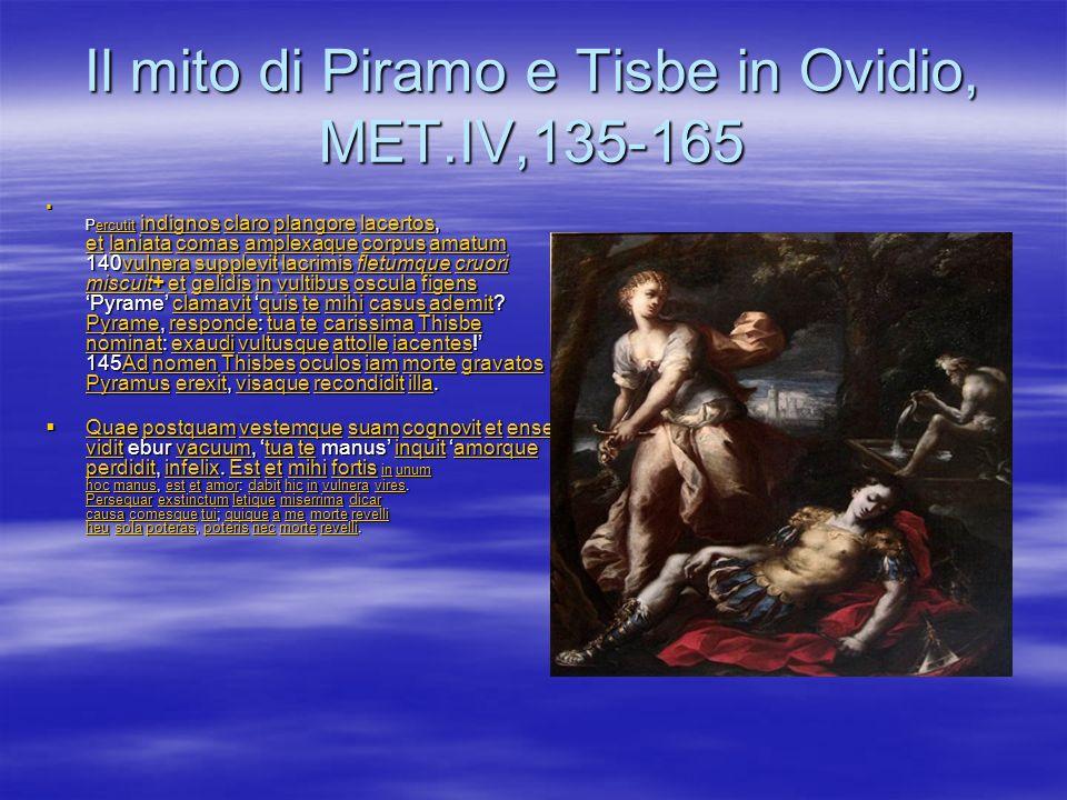 Il mito di Piramo e Tisbe in Ovidio, MET.IV,135-165 Percutit indignos claro plangore lacertos, et laniata comas amplexaque corpus amatum 140vulnera su