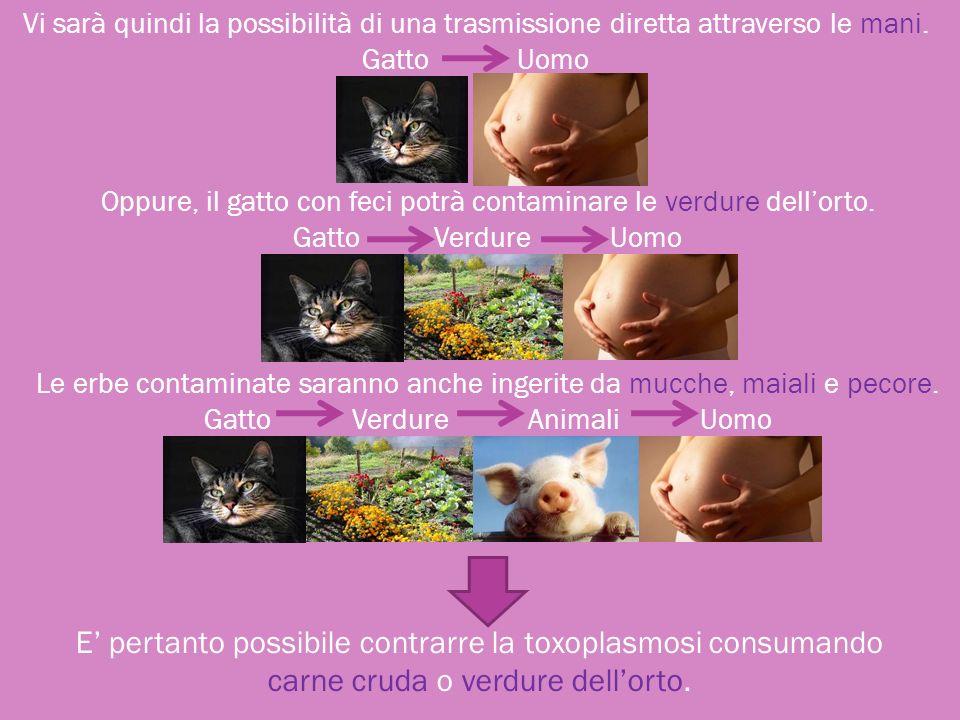 E pertanto possibile contrarre la toxoplasmosi consumando carne cruda o verdure dellorto. Vi sarà quindi la possibilità di una trasmissione diretta at