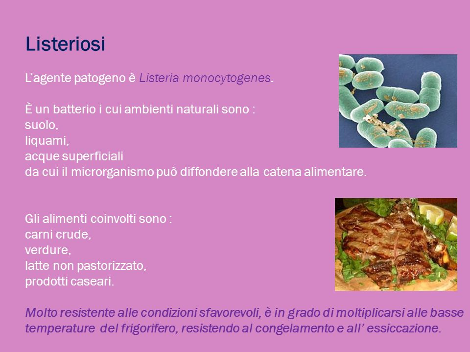 Listeriosi Lagente patogeno è Listeria monocytogenes. È un batterio i cui ambienti naturali sono : suolo, liquami, acque superficiali da cui il micror