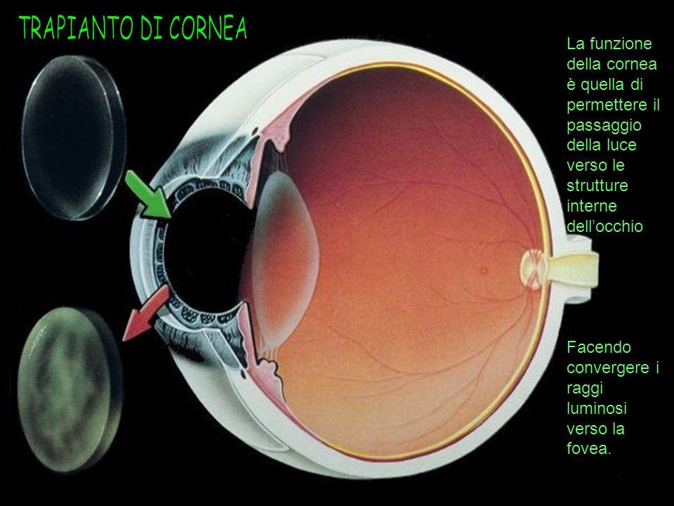 La funzione della cornea è quella di permettere il passaggio della luce verso le strutture interne dellocchio Facendo convergere i raggi luminosi vers