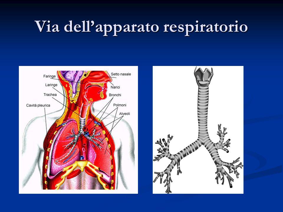 Via dellapparato respiratorio