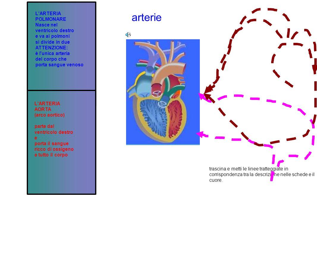 arterie L'ARTERIA POLMONARE Nasce nel ventricolo destro e va ai polmoni si divide in due ATTENZIONE: è l'unica arteria del corpo che porta sangue veno
