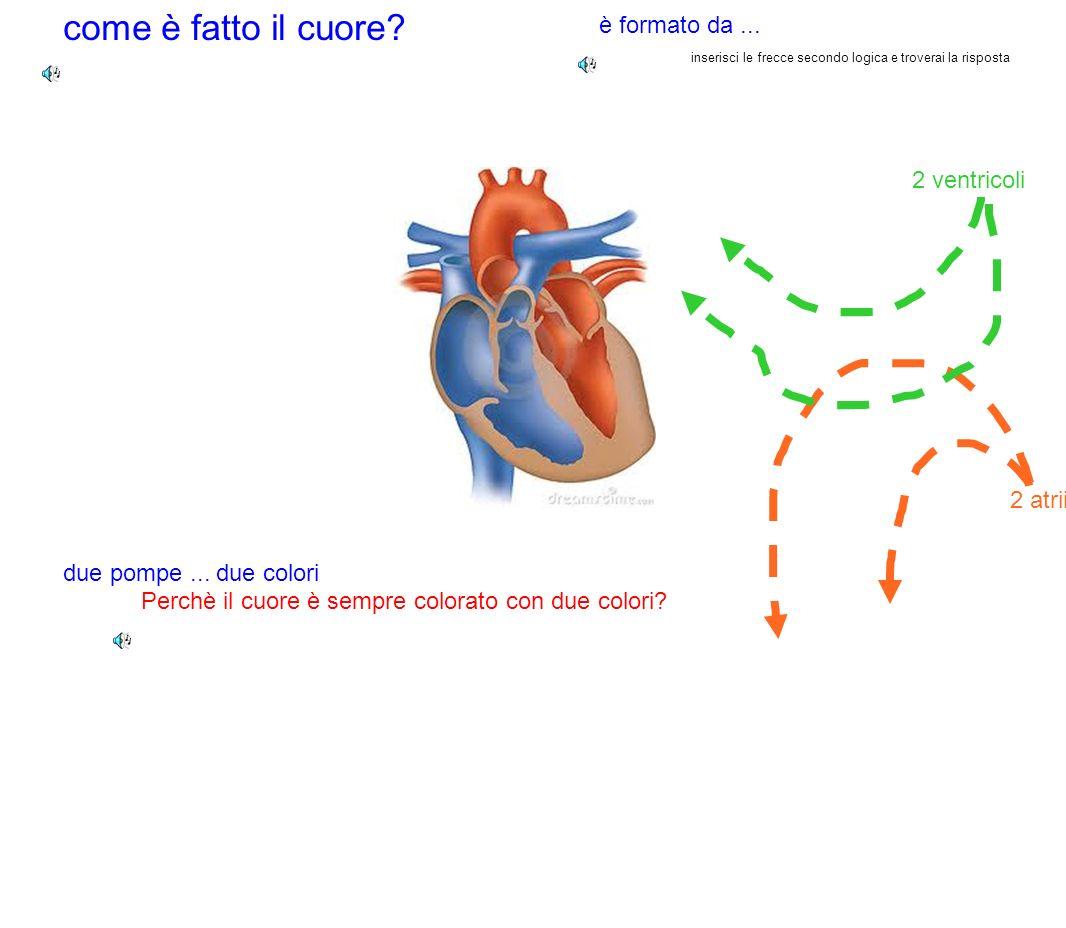 come è fatto il cuore? Perchè il cuore è sempre colorato con due colori? è formato da... 2 atrii 2 ventricoli due pompe... due colori inserisci le fre