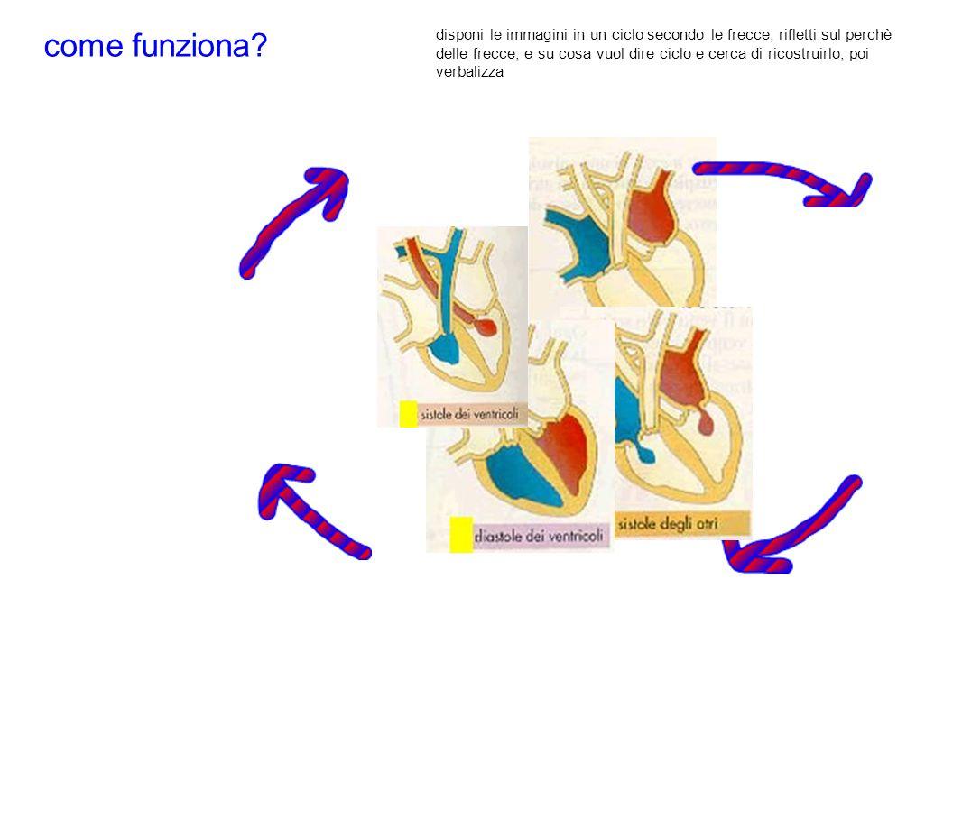 come funziona? disponi le immagini in un ciclo secondo le frecce, rifletti sul perchè delle frecce, e su cosa vuol dire ciclo e cerca di ricostruirlo,
