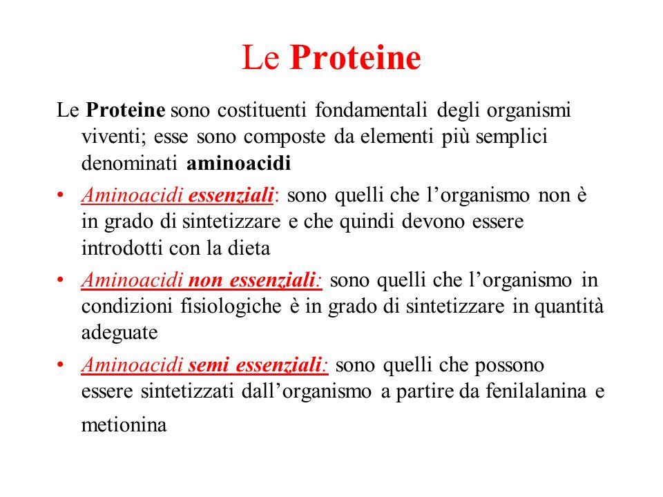 Le Proteine Le Proteine sono costituenti fondamentali degli organismi viventi; esse sono composte da elementi più semplici denominati aminoacidi Amino