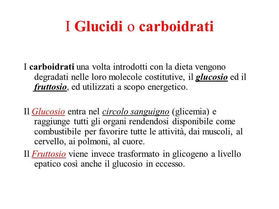 I Glucidi o carboidrati I carboidrati una volta introdotti con la dieta vengono degradati nelle loro molecole costitutive, il glucosio ed il fruttosio