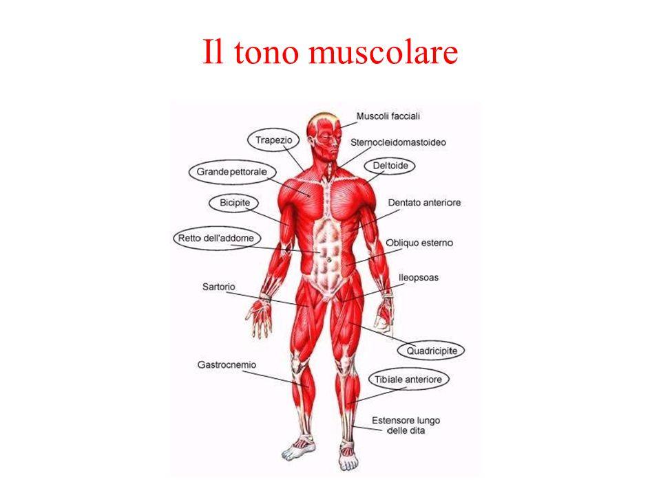 Il tono muscolare