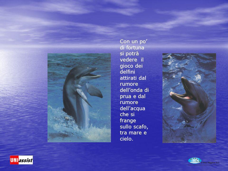 Con un po di fortuna si potrà vedere il gioco dei delfini attirati dal rumore dellonda di prua e dal rumore dellacqua che si frange sullo scafo, tra mare e cielo.