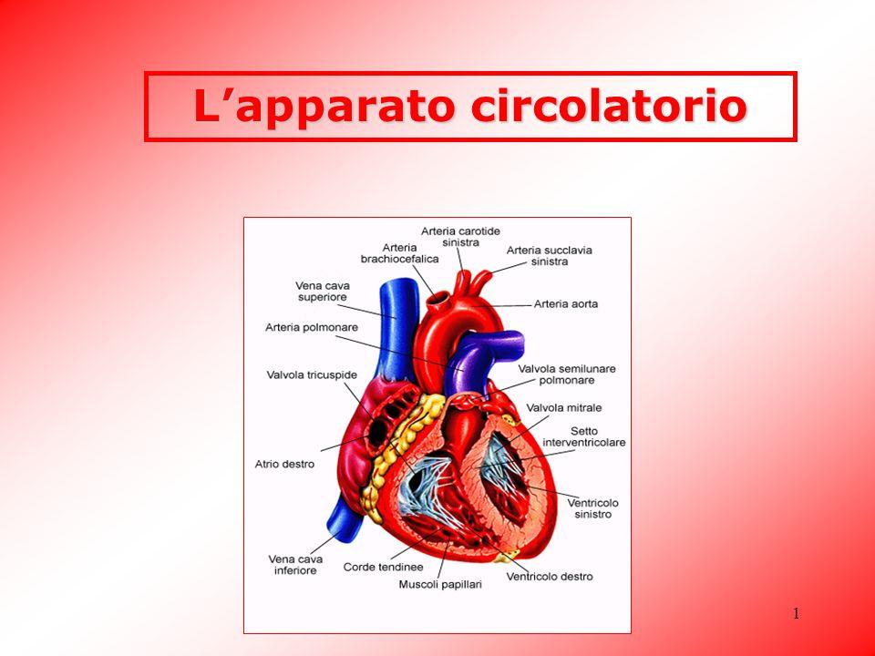 Classe 5 A - Arezio Federico1 Lapparato circolatorio