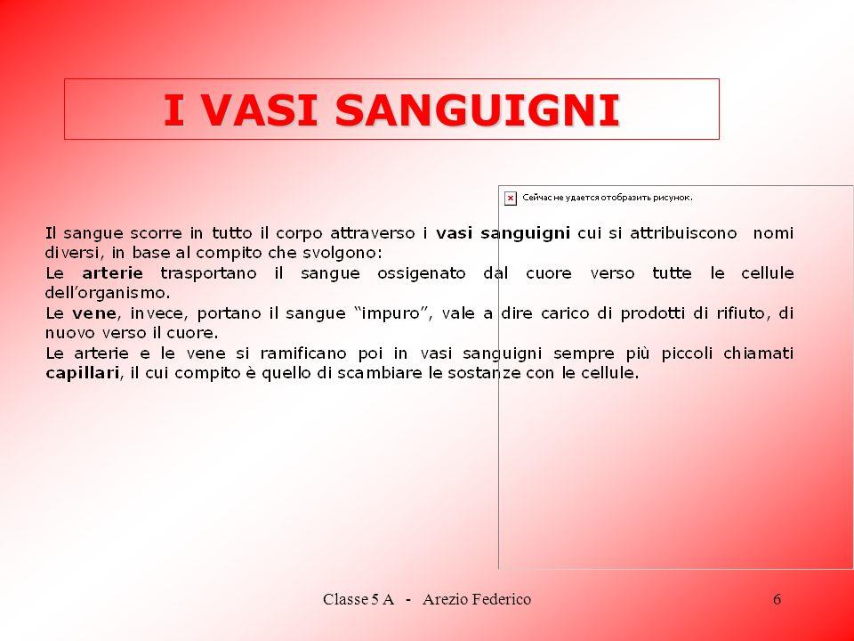 Classe 5 A - Arezio Federico6 I VASI SANGUIGNI