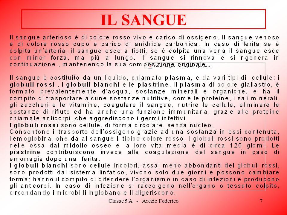 Classe 5 A - Arezio Federico7 IL SANGUE
