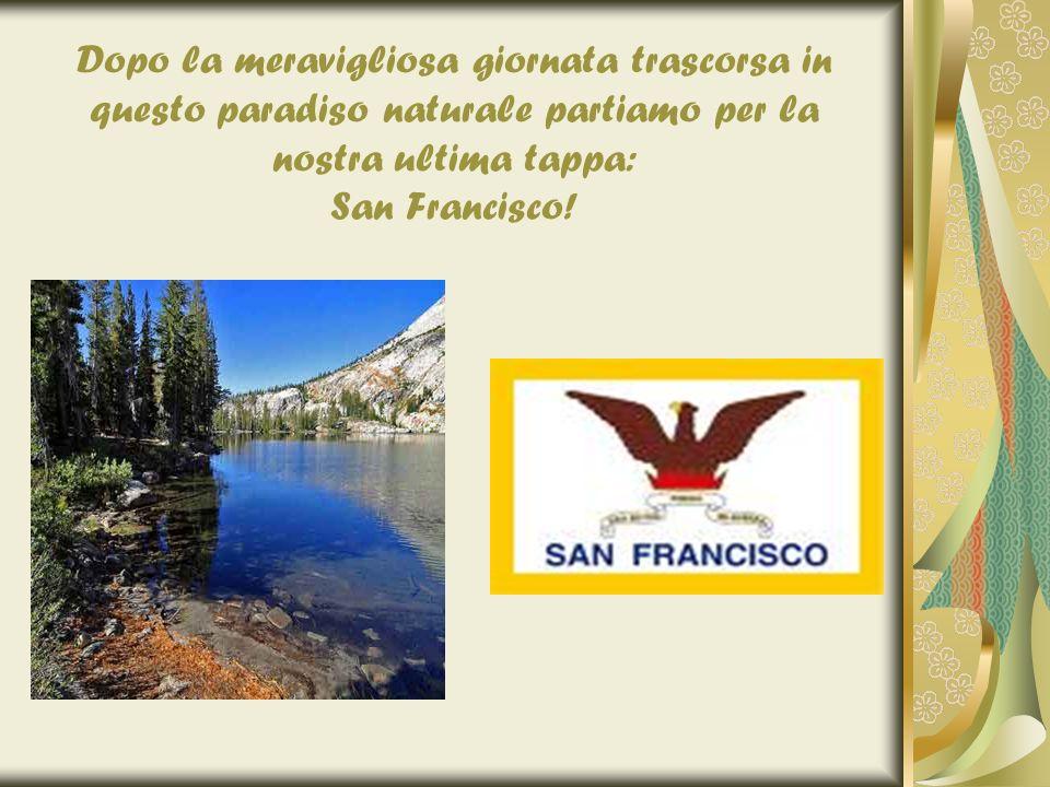 Dopo la meravigliosa giornata trascorsa in questo paradiso naturale partiamo per la nostra ultima tappa: San Francisco!