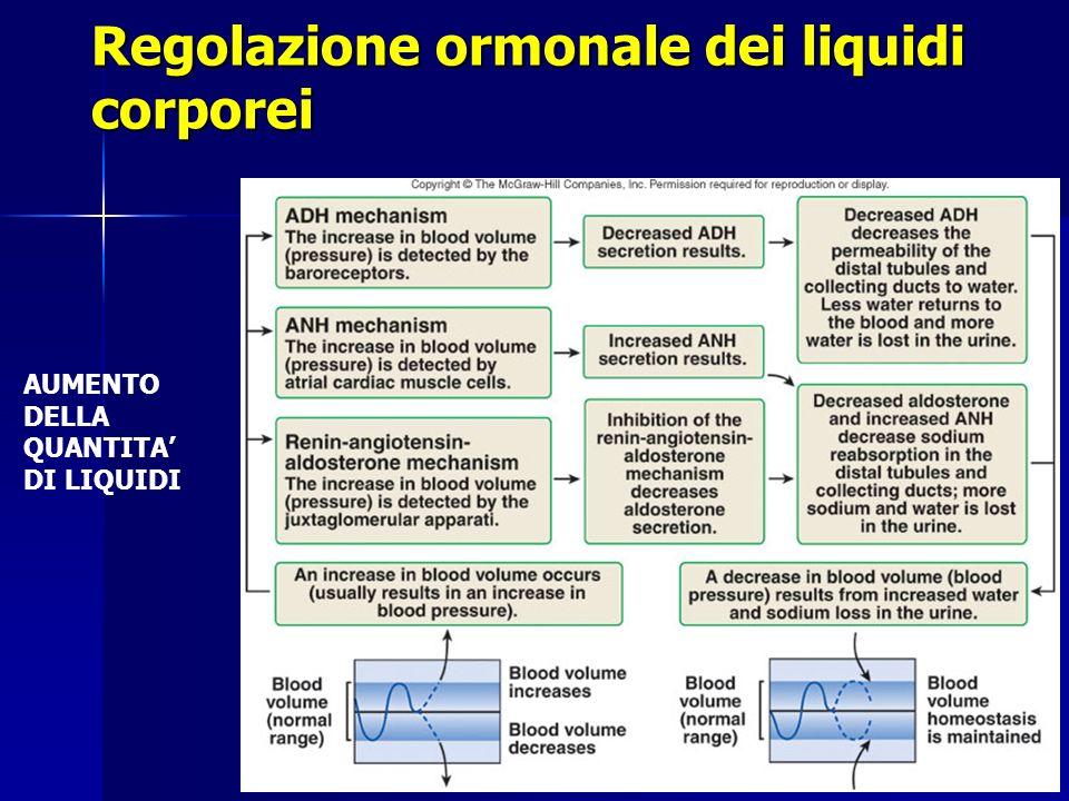 Regolazione ormonale dei liquidi corporei AUMENTODELLAQUANTITADI LIQUIDI