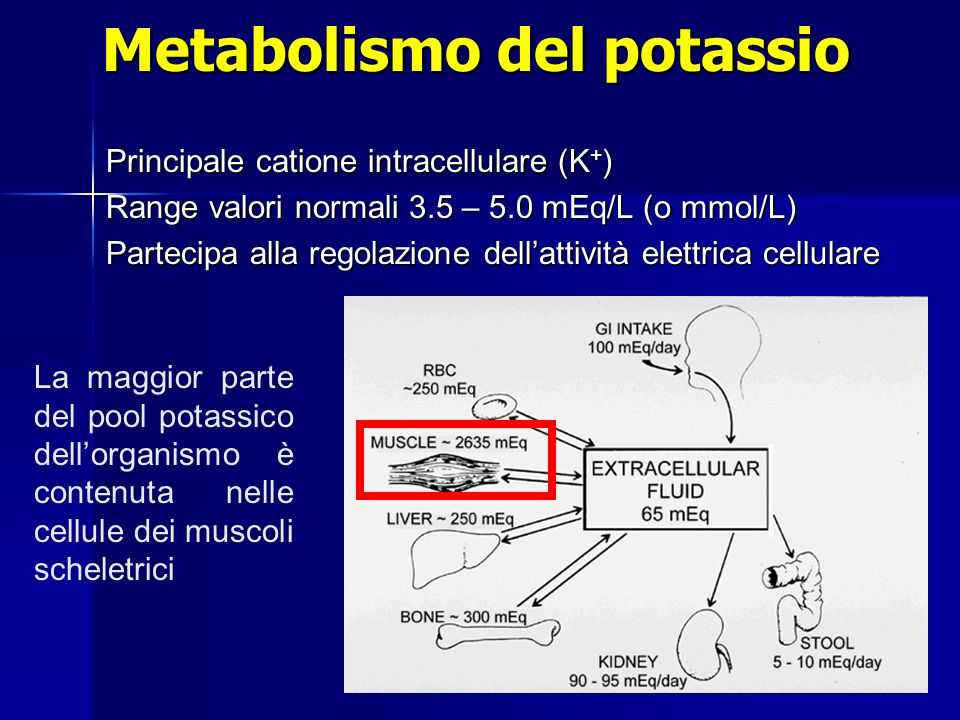 Metabolismo del potassio Principale catione intracellulare (K + ) Range valori normali 3.5 – 5.0 mEq/L (o mmol/L) Partecipa alla regolazione dellattiv