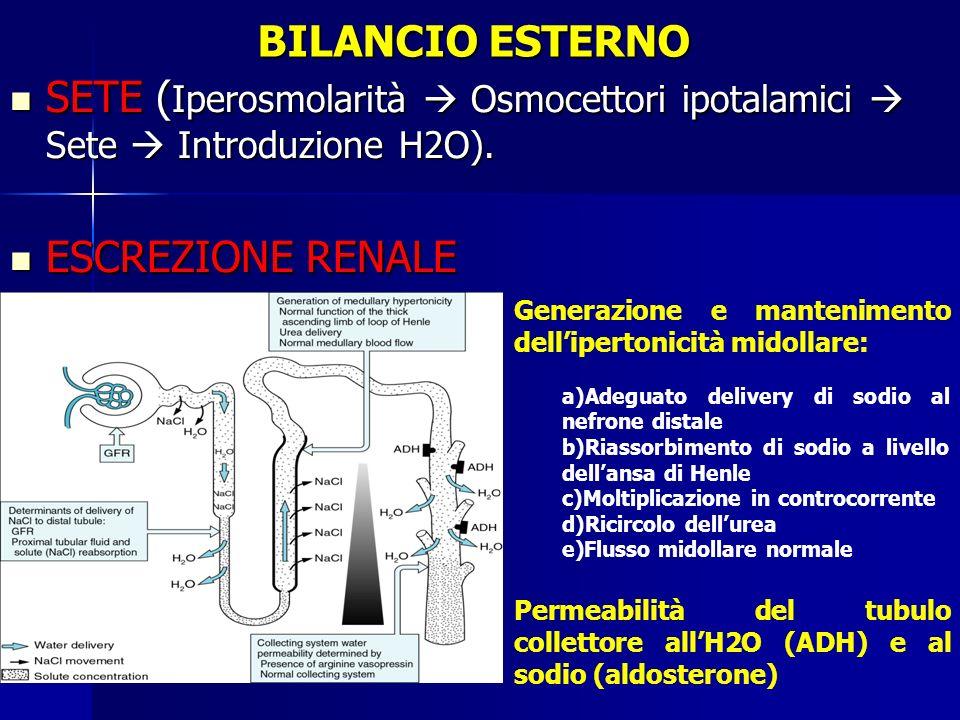 BILANCIO ESTERNO SETE ( Iperosmolarità Osmocettori ipotalamici Sete Introduzione H2O). SETE ( Iperosmolarità Osmocettori ipotalamici Sete Introduzione