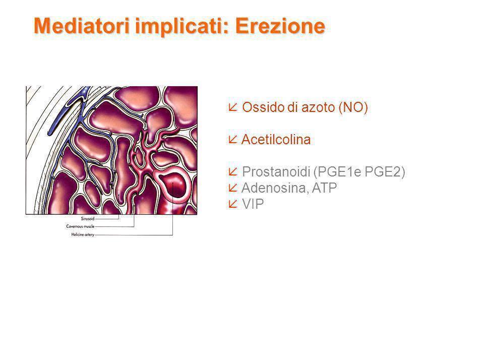 Ossido di azoto (NO) Acetilcolina Prostanoidi (PGE1e PGE2) Adenosina, ATP VIP Mediatori implicati: Erezione