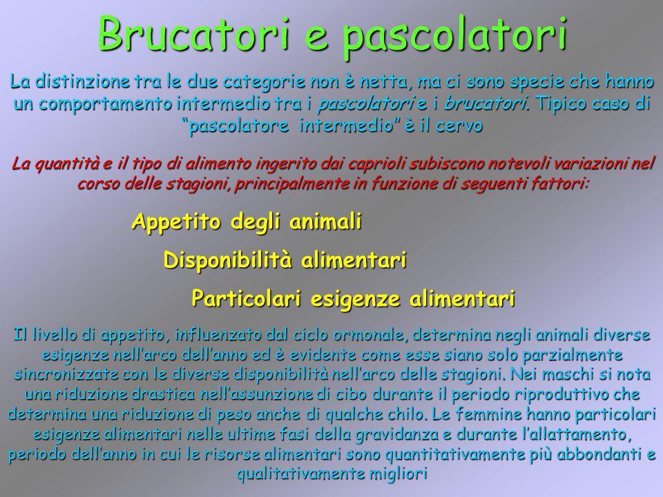 Brucatori e pascolatori La distinzione tra le due categorie non è netta, ma ci sono specie che hanno un comportamento intermedio tra i pascolatori e i