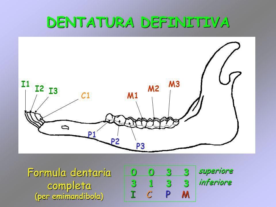 DENTATURA DEFINITIVA M1 M2 M3 P1 P2 P3 C1 I1 I2 I3 0 0 3 3 3 1 3 3 I C P M Formula dentaria completa (per emimandibola) inferioresuperiore