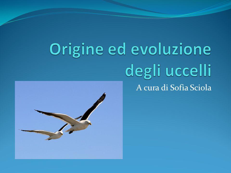 A cura di Sofia Sciola