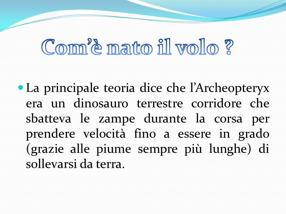 La principale teoria dice che lArcheopteryx era un dinosauro terrestre corridore che sbatteva le zampe durante la corsa per prendere velocità fino a e