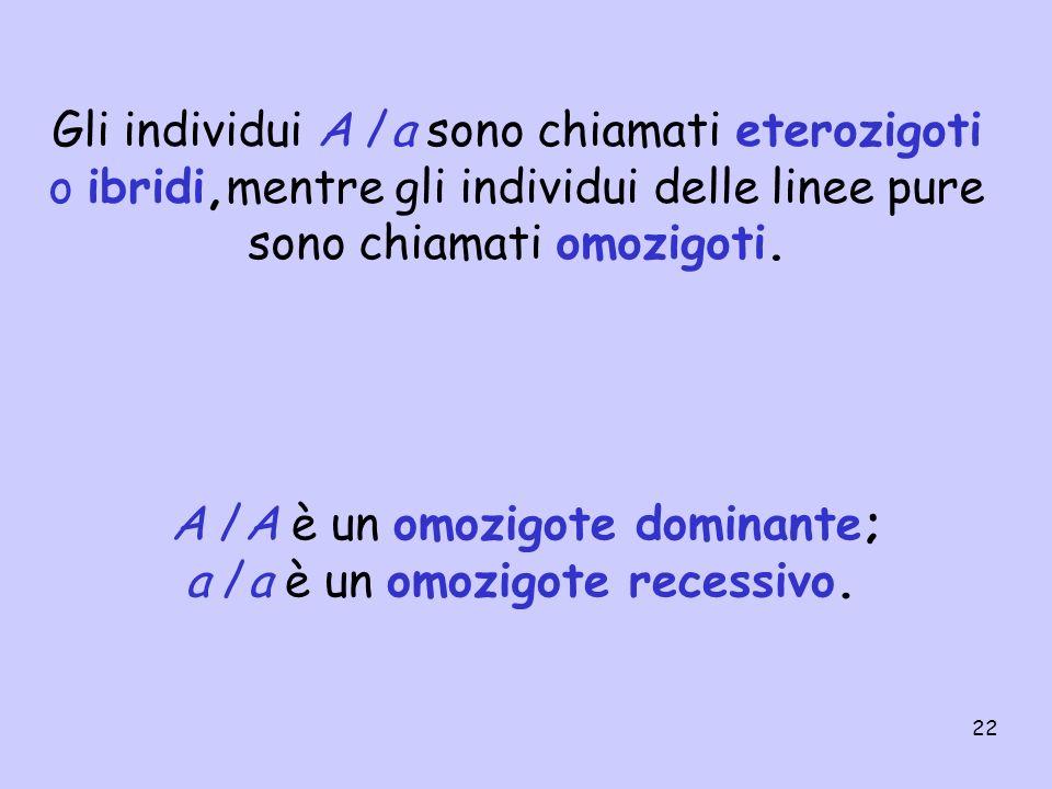 22 Gli individui A /a sono chiamati eterozigoti o ibridi,mentre gli individui delle linee pure sono chiamati omozigoti. A /A è un omozigote dominante;