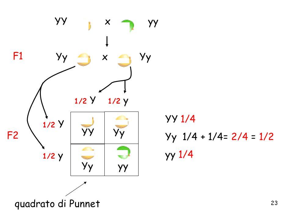 23 YY x yy Yy x Yy F1 F2 YY Yy yy YY 1/4 Yy 1/4 + 1/4= 2/4 = 1/2 yy 1/4 quadrato di Punnet 1/2 Y 1/2 y 1/2 Y 1/2 y