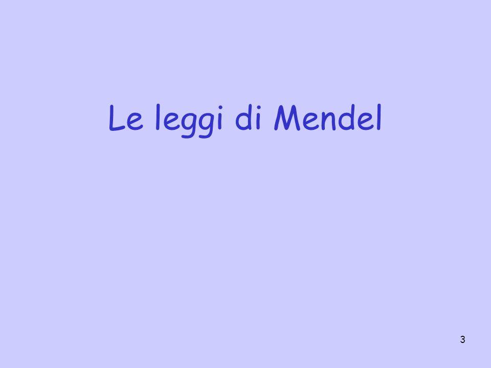 3 Le leggi di Mendel
