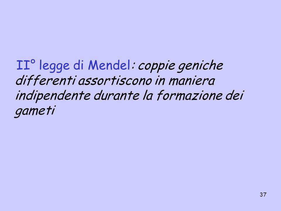 37 II° legge di Mendel: coppie geniche differenti assortiscono in maniera indipendente durante la formazione dei gameti