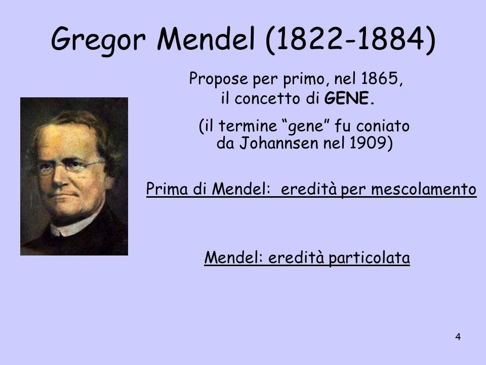 4 (il termine gene fu coniato da Johannsen nel 1909) Propose per primo, nel 1865, il concetto di GENE. Prima di Mendel: eredità per mescolamento Mende