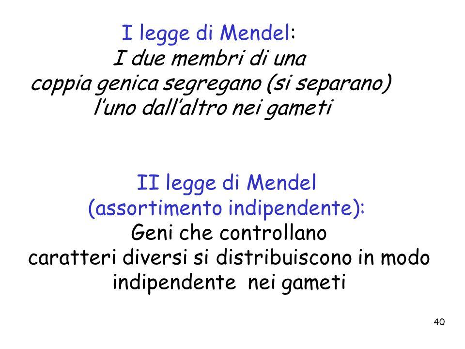 40 I legge di Mendel: I due membri di una coppia genica segregano (si separano) luno dallaltro nei gameti II legge di Mendel (assortimento indipendent