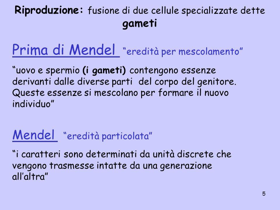 26 I° legge di Mendel: I due membri di una coppia genica segregano (si separano) luno dallaltro nei gameti, metà dei quali riceve un membro della coppia, mentre laltra metà riceve laltro membro