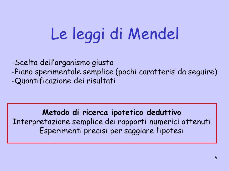 6 Le leggi di Mendel -Scelta dellorganismo giusto -Piano sperimentale semplice (pochi caratteris da seguire) -Quantificazione dei risultati Metodo di