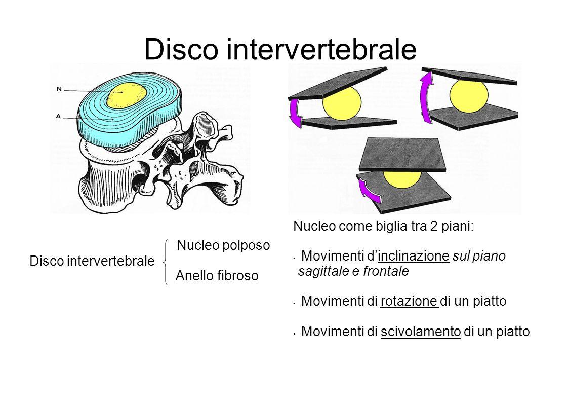 Disco intervertebrale Nucleo come biglia tra 2 piani: Movimenti dinclinazione sul piano sagittale e frontale Movimenti di rotazione di un piatto Movimenti di scivolamento di un piatto Nucleo polposo Anello fibroso Disco intervertebrale