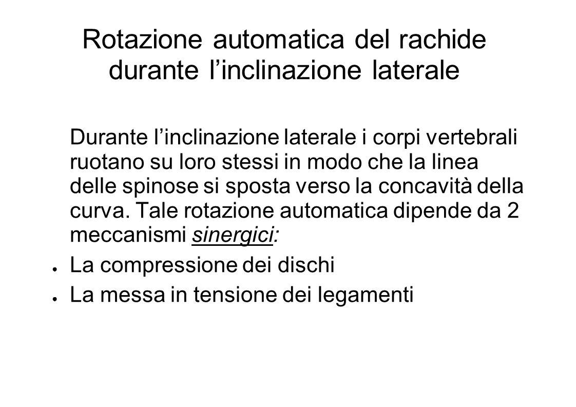 Rotazione automatica del rachide durante linclinazione laterale Durante linclinazione laterale i corpi vertebrali ruotano su loro stessi in modo che la linea delle spinose si sposta verso la concavità della curva.