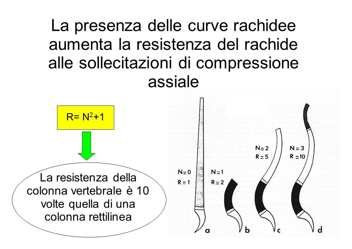 La presenza delle curve rachidee aumenta la resistenza del rachide alle sollecitazioni di compressione assiale R= N 2 +1 La resistenza della colonna vertebrale è 10 volte quella di una colonna rettilinea
