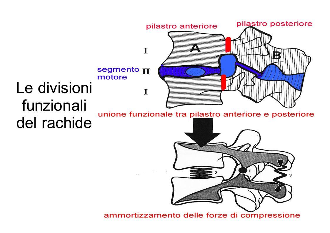 Le divisioni funzionali del rachide