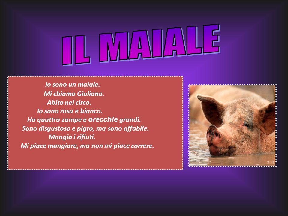 Io sono un maiale. Mi chiamo Giuliano. Abito nel circo. Io sono rosa e bianco. Ho quattro zampe e orecchie grandi. Sono disgustoso e pigro, ma sono af