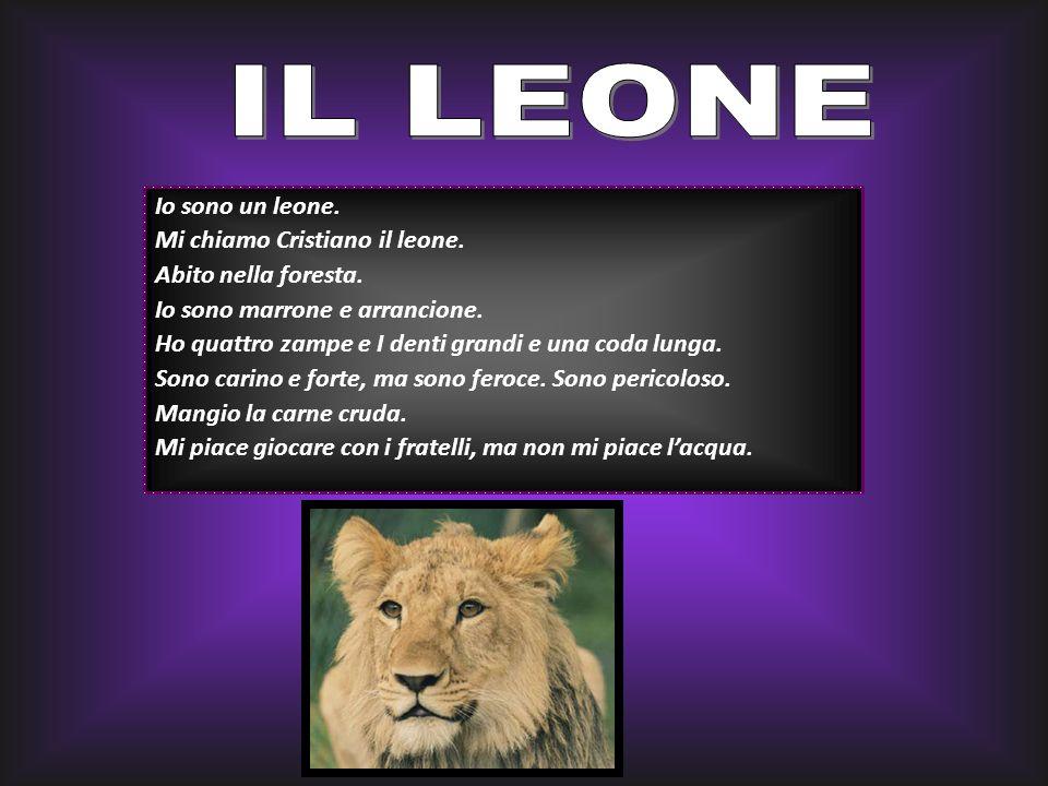 Io sono un leone. Mi chiamo Cristiano il leone. Abito nella foresta. Io sono marrone e arrancione. Ho quattro zampe e I denti grandi e una coda lunga.