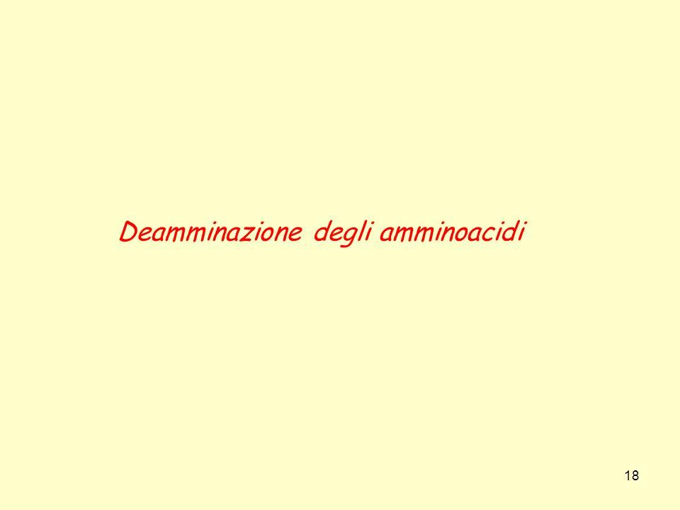 18 Deamminazione degli amminoacidi